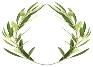 couronne d'olivier sur fond blanc